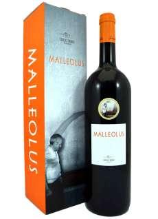 Wine Avenencia 16 Meses